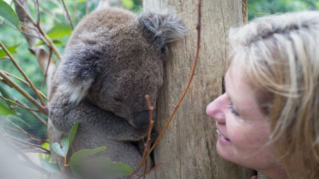 Kerry McMahon with one of the rescued koalas.