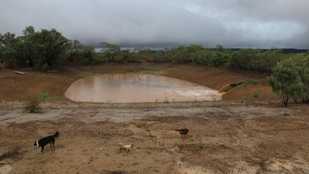 A dam filling up after 97 millimetres of rain at Trinidad, 200km north west of Quilpie.