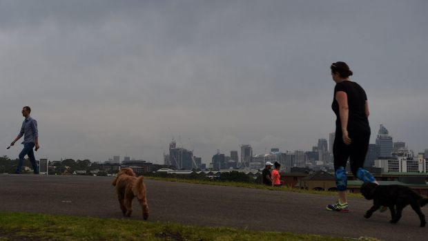 People exercise and walk their dogs during a dry spell at Sydney Park.