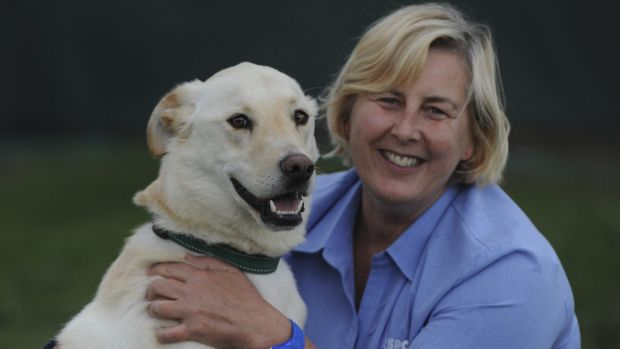"Director of Animal Welfare, Jane Gregor, with three-year-old Labrador cross, ""George"" at the RSPCA shelter at Weston."