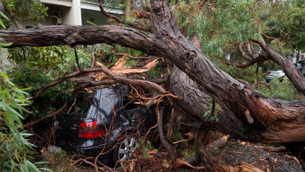 A tree has fallen on three cars in Darling Street, Glebe, after excess rain.