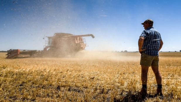 Mallee farmer Leon Hogan on his property near Birchip. His wheat crop harvest is down 80 per cent in 2015.
