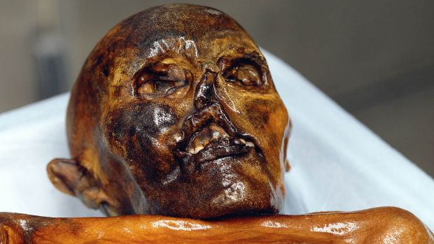Otzi the ice man, a 5300 year old mummy, found in the Tyrolean Otz Valley in September 1991, is considered the oldest ...
