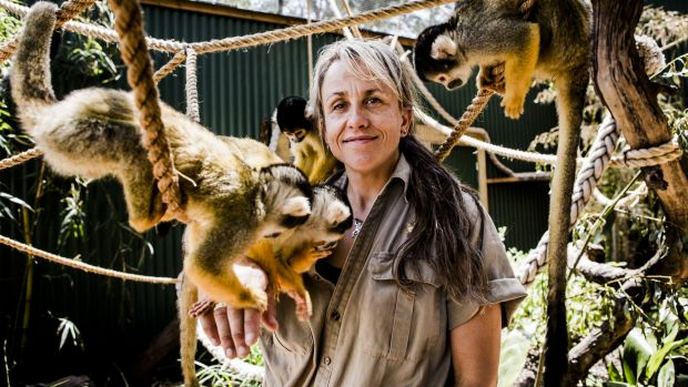 Zookeeper Lou Grossfeldt with Mogo Zoo's Bolivian squirrel monkeys.
