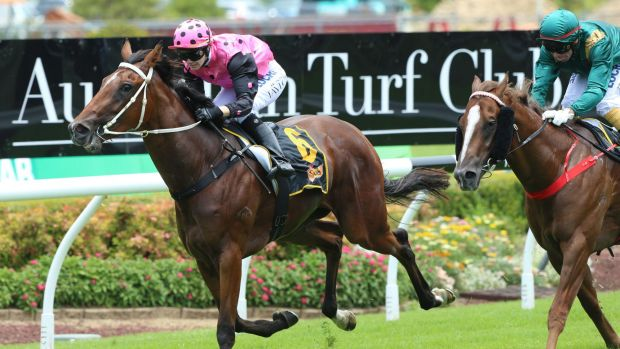 In the pink: Jess Taylor rides French Fern to victory in the Schweppes Handicap.