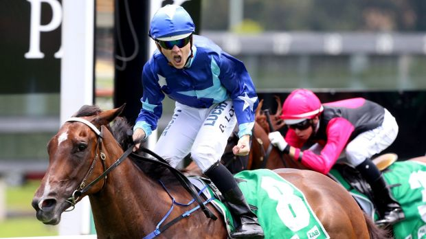 Pumped: Brodie Loy and Rose Of Man take out the TAB Highway Plate - but at a cost to Loy.