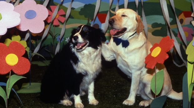 Bouncer, right, delivered the best dog's tale in Neighbours