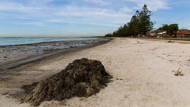 Rotting seaweed and mudflats have been blamed for the smell.