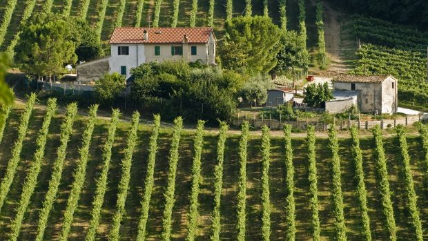 Italian and other Mediterranean vineyards may hold the secret to bringing Queensland wines to the world stage.