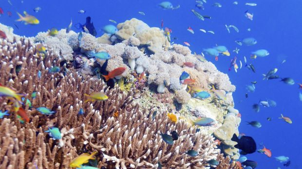 Ninety per cent of the world's coral reefs don't have adequate protection, a study has found.