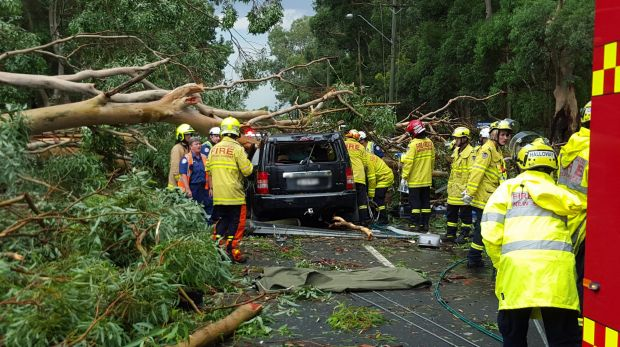 A tree has fallen on a car in Emu Plains, killing a male passenger and leaving the female driver critical.
