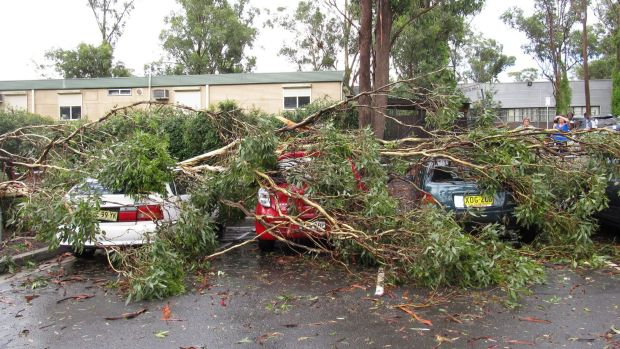 Trees fell on cars parked at a Mount Druitt shopping centre.