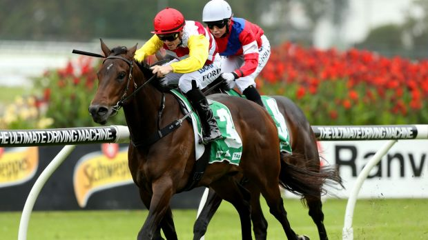Matthew Dale runner Bitburg will race in the Inglis Dash at Flemington on Saturday.