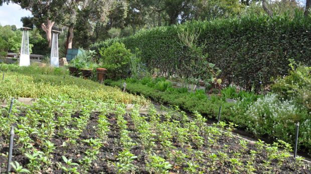 Tips on how to grow your own vegetables and herbs over a for Au jardin botanic gardens