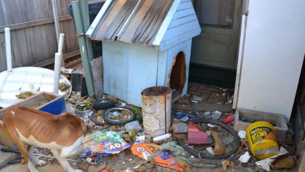 A picture of the conditions the dog was living in at the Belconnen home.