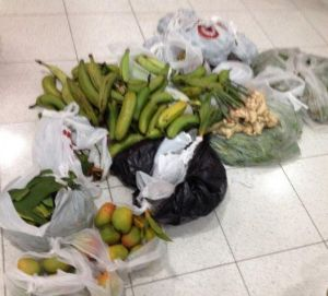 The haul included 15 mangoes, 68 bananas, two pineapples, seven ginger bulbs, 6 kilograms of betel nuts, three plants ...
