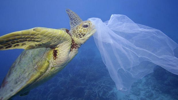 A sea turtle with a plastic bag on its nose in Cairns, Queensland. Eight million tonnes of plastic make their way into ...