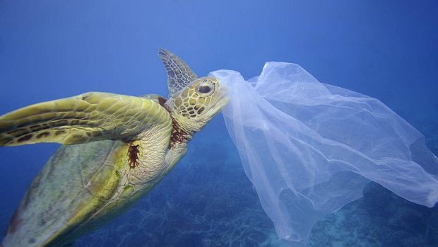 "The Senate committee reports ""toxic tide"" of marine plastic pollution."