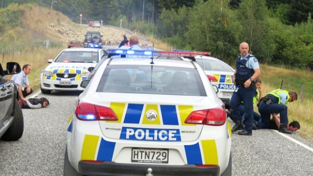 Police handcuff occupants of the car that was stopped by the woolly roadblock.