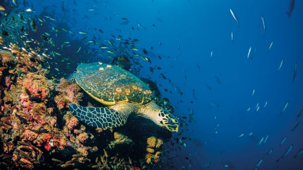 Plastic microbeads enter the ocean, where they are ingested by sea life.