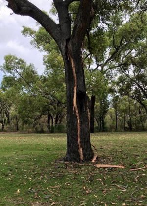 A tree was split in half by lightning as a cricket match was played nearby in Balga.