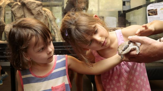Ella Zochling, 4, and Maisie Zockling, 5, of Tennant Creek have a close look at a blue tongue lizard at the Snakes Alive ...