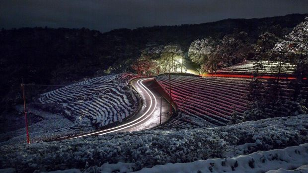 Rare snow on a tea plantation in Pinglin in New Taipei City, Taiwan, on Monday.