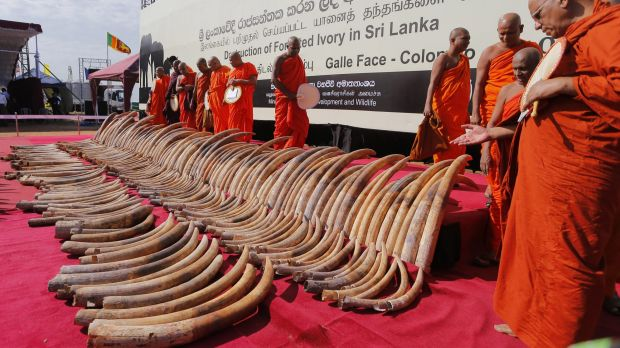 The symbolic ceremony sends a powerful message to ivory traders and consumers in Asia.