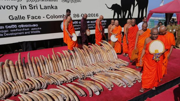 Sri Lankan Buddhist monks give blessings for a better rebirth to African elephants killed by poachers.