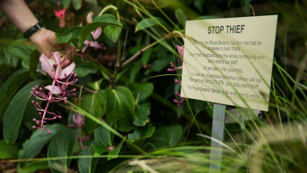 A sign warns plant thieves at the Botanic Gardens. Theft of plants isn't an everyday occurrence at the gardens but it ...