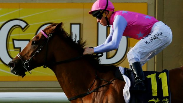 Expressway hope: Cameron Handicap winner Forget will tackle Saturday's group 2 race at Rosehill.