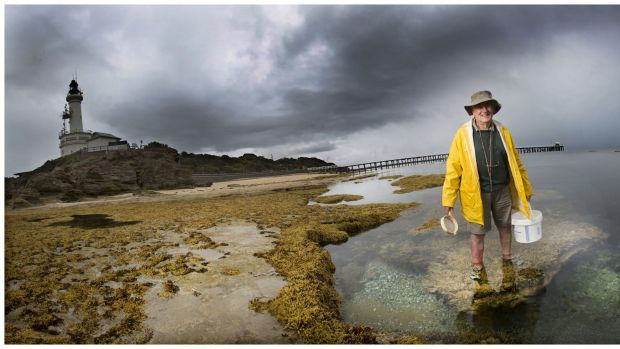 Citizen scientist Bob Burn's fascination with marine mollusc has seen him scour the Victorian coastline.