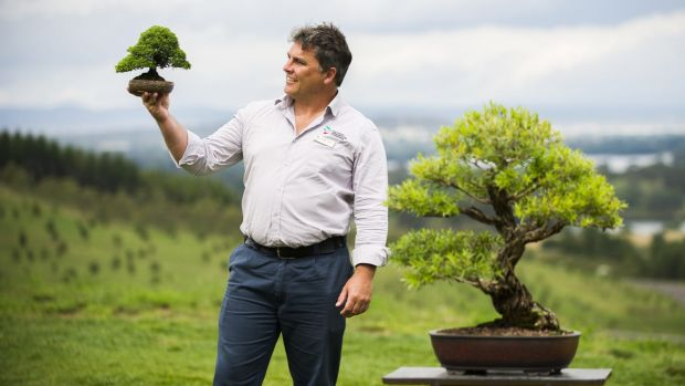 The National Bonsai and Penjing Collection curator Leigh Taafe with a Juniper tree at the National Arboretum. The tree ...