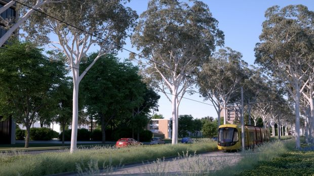 An artist's impression of the Capital Metro Gungahlin tram line going down Northbourne Avenue once trees have grown back.