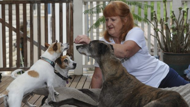 Foster dog carer for ACT Rescue and Foster, Helen Shannon with her dogs Max the greyhound and Poppy the mini Fox Terrier ...