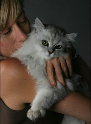 At least the study proved that cats actually did like their owners.