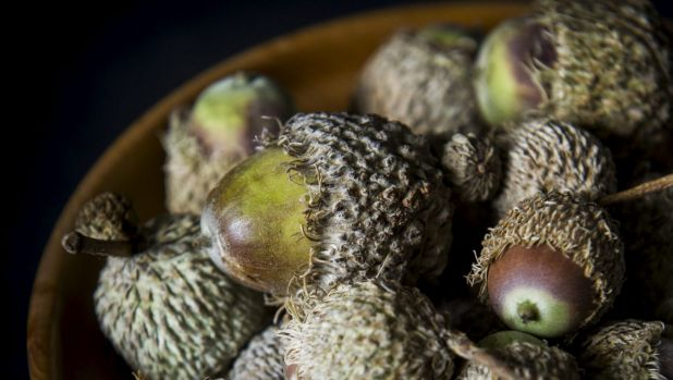 Acorns Australia managing director George Lucas says the acorns name resonates in Europe and the English speaking world, ...