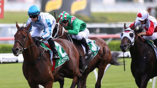 Longer journey: Can Testashadow handle the 2000m at Randwick on Saturday?