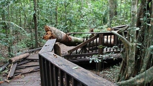 The Cathedral Fig Boardwalk in Far North Qld has been closed after being damaged.