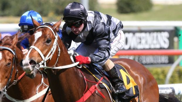 Maturing rapidly: Chris Waller believes Counterattack is set for a strong preparation.