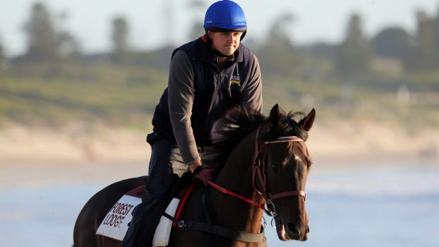 Since his Caulfield win, Signoff has given three negative tests, but will not start on Saturday.