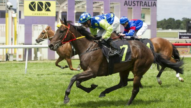 Rock on Zariz could be on track for the listed Canberra Guineas.