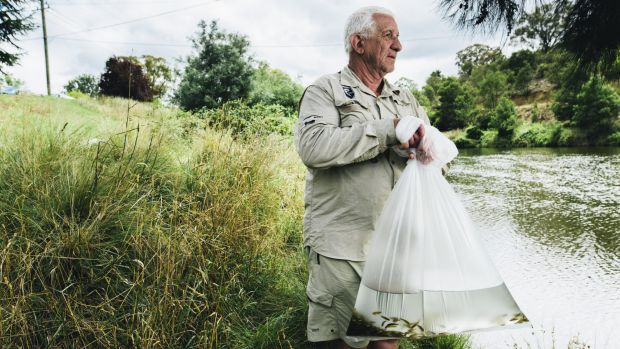 Peter Kilfoile, of the Canberra Angler's Association, with one of the bags of fish ready for release.
