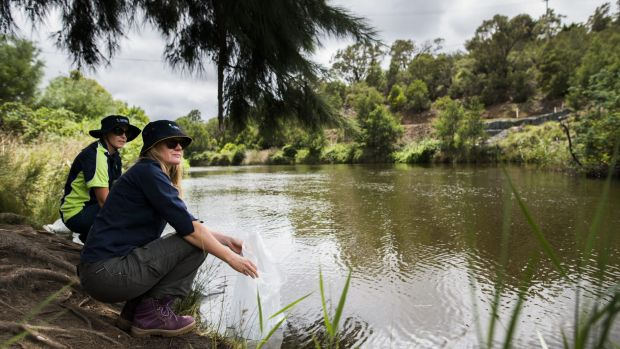 how to catch murray cod in canberra