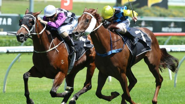 Late charge: Hugh Bowman rides Amicus to victory in the Breeders Classic at Randwick.