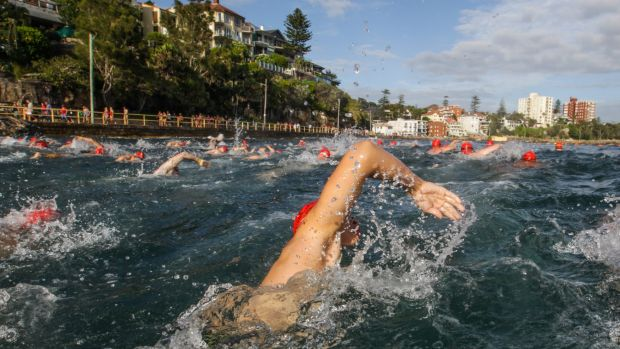 A wave of swimmers competing in the 1km division of  the 2016 Cole Classic head to the finish at Manly Beach.