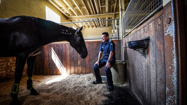Leading Senior Constable Kevin Knowles with Tango at the 104-year-old Police Mounted Branch stables in Southbank, which ...