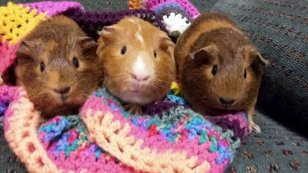 Jeffery (centre) and two girlfriends were lucky to be rehomed after being subjected to secret experiments.