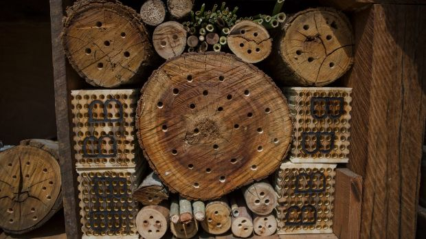 Rooms for every species of bee.