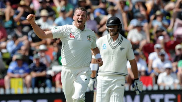 No spent force: Peter Siddle celebrates a wicket.